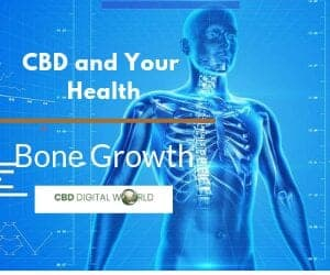 CBD and Bone Growth